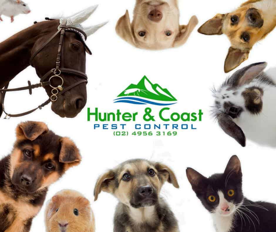 pet friendly pest control Newcastle